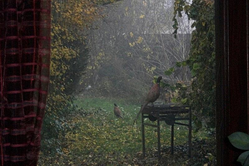 hahn-auf-dem-grill_gerd-winter_0