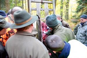 Praxisunterricht: Versorgen des erlegten Wildes. Lehrgangsteilnehmer schauen beim Ausweiden eines Wildschweins zu, das kopfüber an einem Aufbrechgestell hängt.