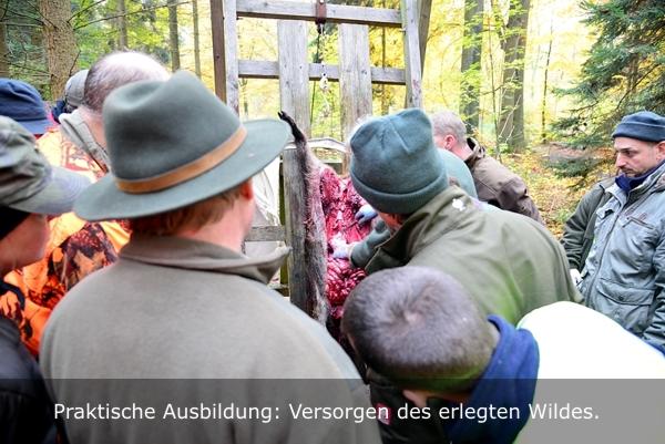 Teilnehmer des Jägerlehrgangs beim Versorgen von Schwarzwild.
