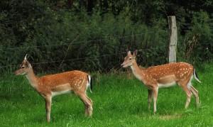 Wildtierfotografie